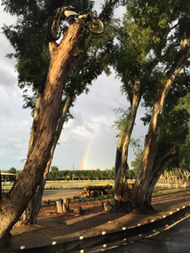 Rainbow on the Ranch featuring the famous Elsinore Tree