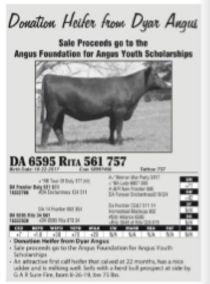 AAA falls sale donation heifer_edited.jp