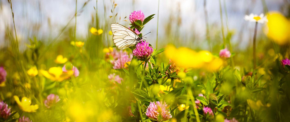 Meadow grass, insects and flowers