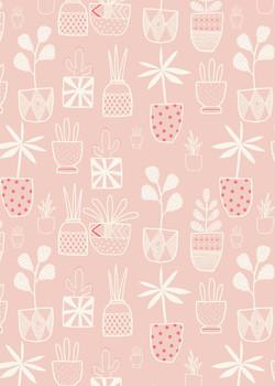 AP_Houseplants_Cactus_Plants_Garden_Pink