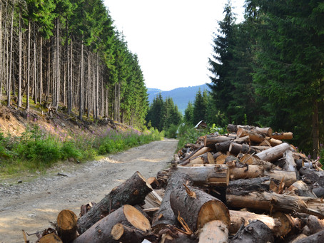 Illegal Logging in the Carpathian Mountains