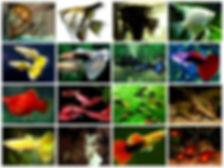 Виды рыбок