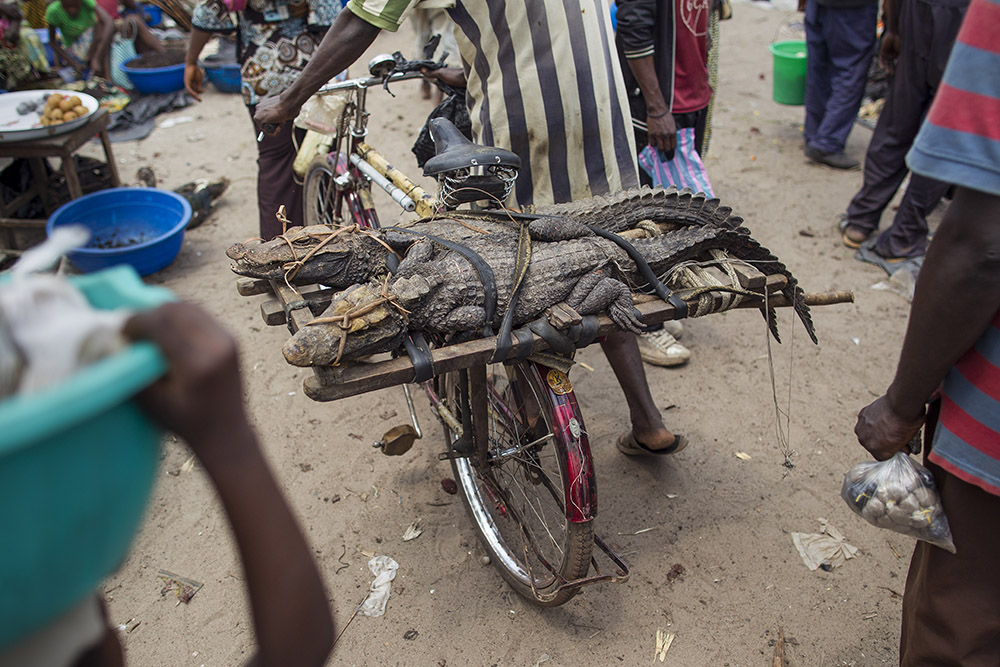 Mbandaka bushmeat congo