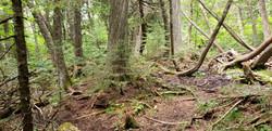 Superior hiking trail