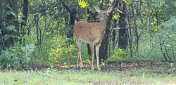 2018 Shenandoah National Park Appalachian Trail Section Hike