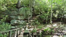 Grayson Highlands State Park, VA.
