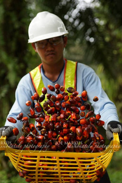 palm oil worker.jpg