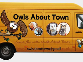 Owls about Town