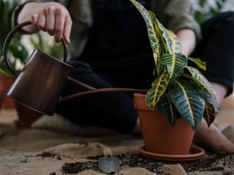 6 Easy Ways To Tell If Your Plants Need Watering