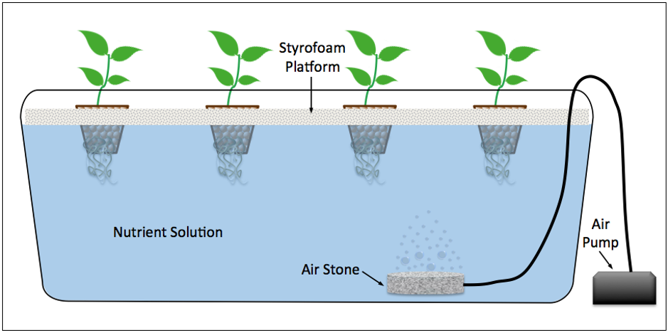 A Deep Water Culture System