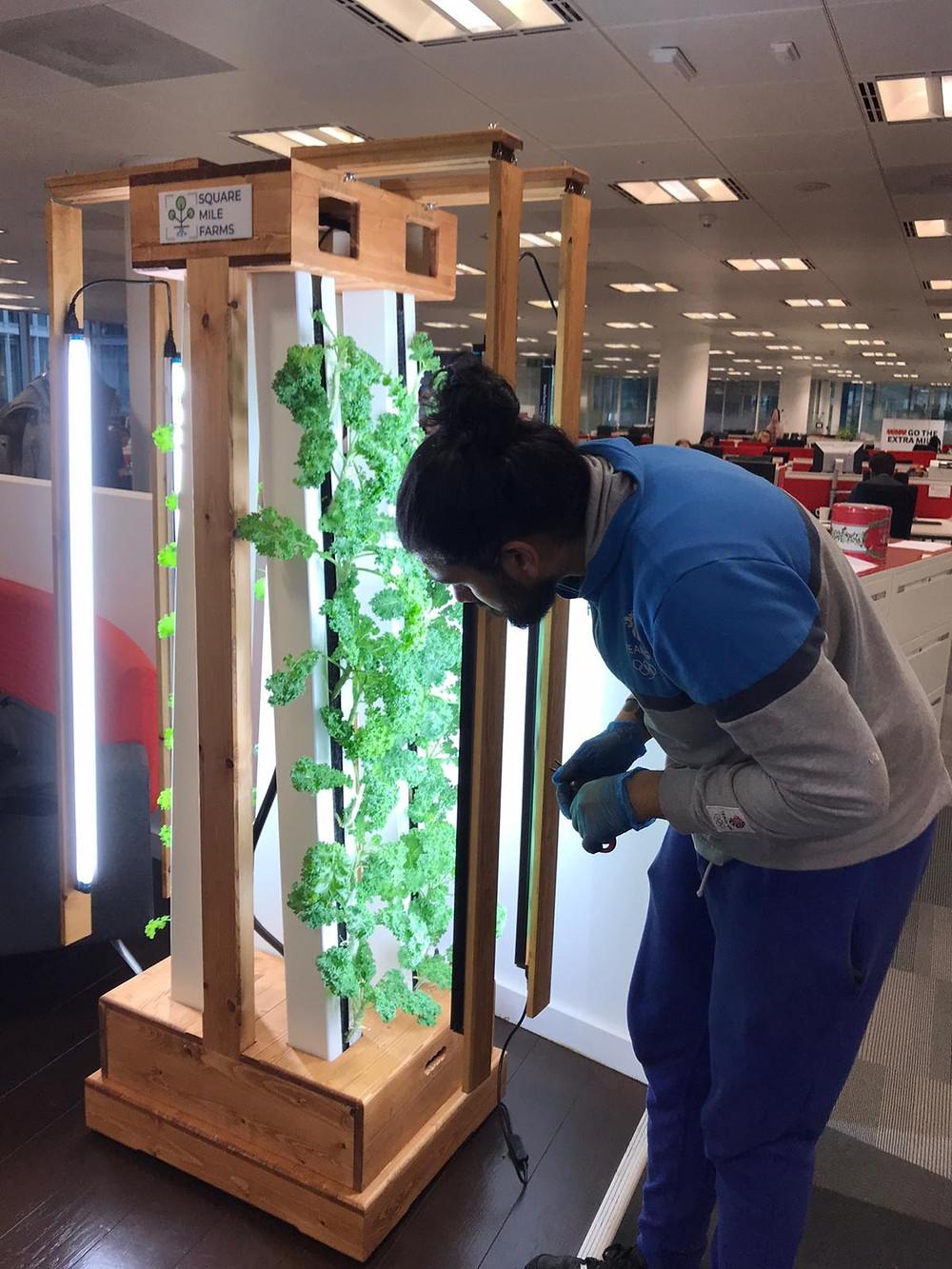 Office farm installation