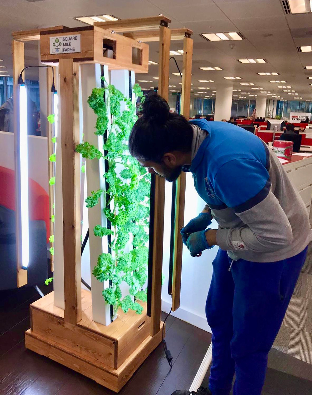 Hydroponic office installation.