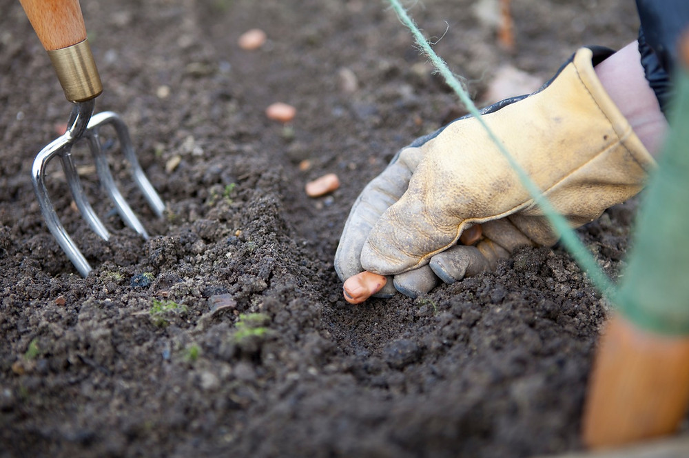 growing your own. Sowing seeds directly into the ground.