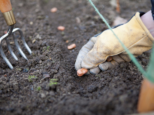 Growing your own in March: a beginners guide to sowing outdoors