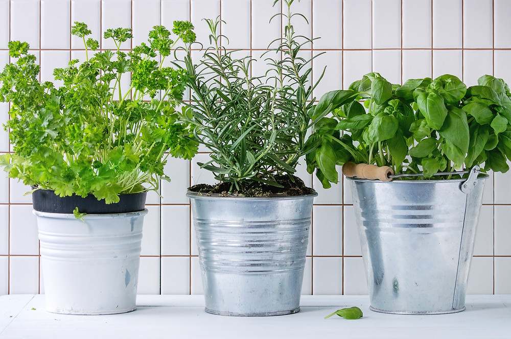 Food waste tip: grow your own herbs at home for an endless supply!