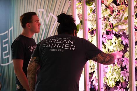 Office Farming.JPG