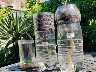 How To Grow Plants In A Water Bottle!