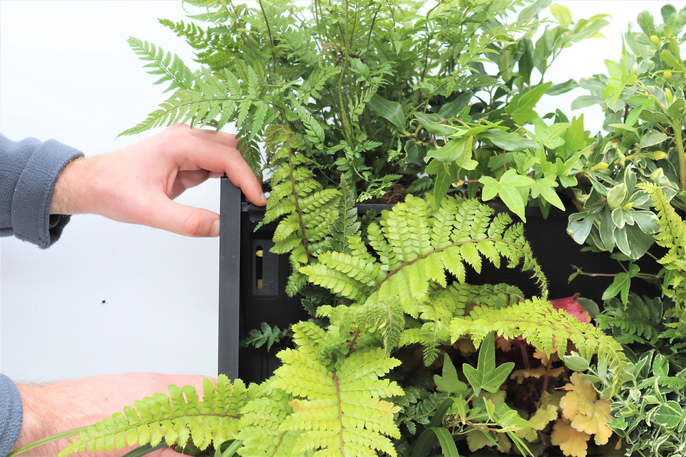 Smart watering systems can make gardening easier