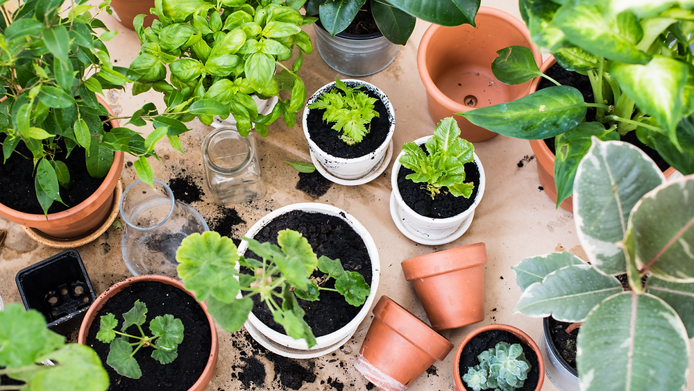Smaller plant pots retain less moisture, making the prone to blowing over on your balcony,