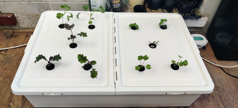 Simple homemade hydroponic system