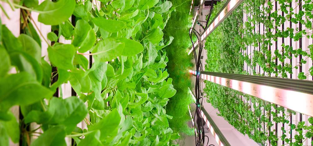 Vertical, hydroponic, urban, rooftop farm based in Paddington, London.