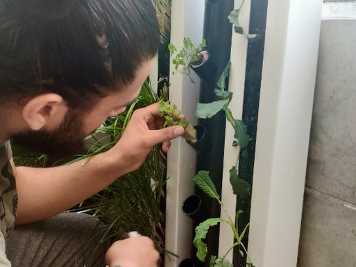 Growing at Home: Part 3 Transplanting Your Seedlings