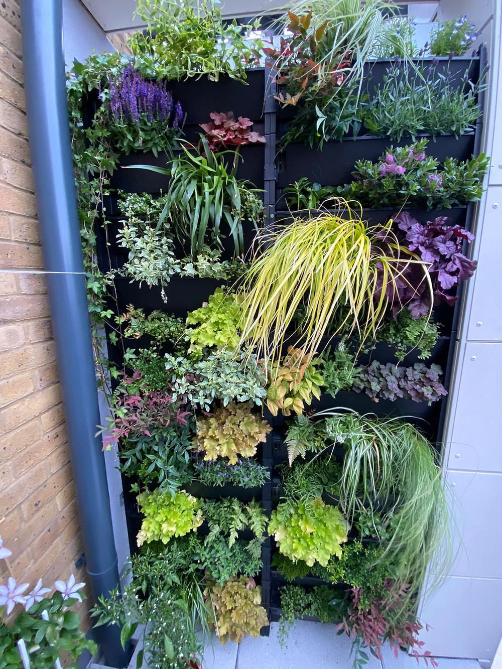 Grow vertically to maximise the growing space in your balcony garden
