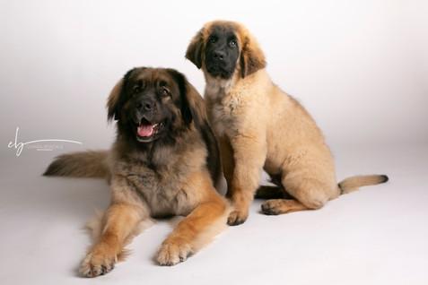 DOG PHOTOGRAPHY VARESE