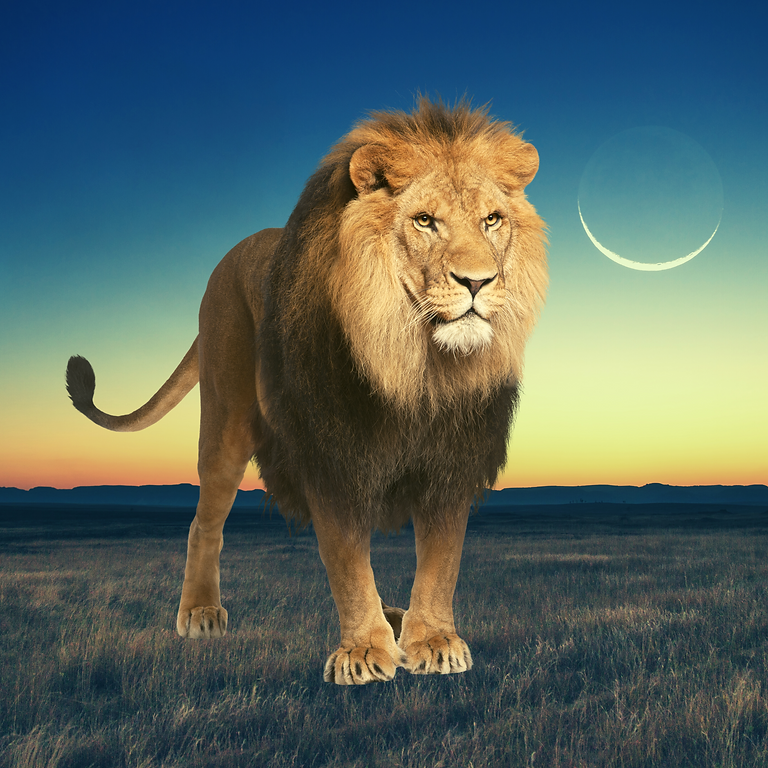 Lion's Gate New Moon Ceremony