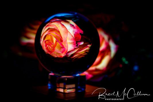 Rose-.jpg