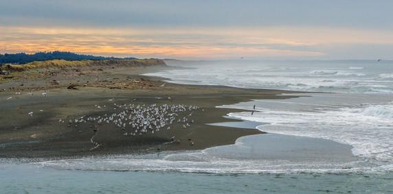 Seagulls on the northern coast of California