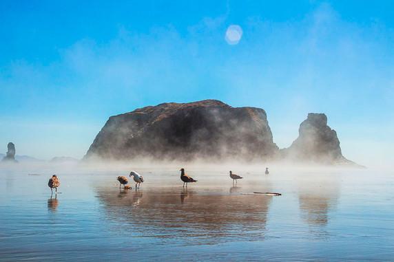 Bandon Seagulls