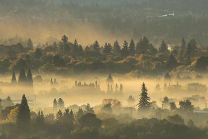 Sellwood Morning Fog