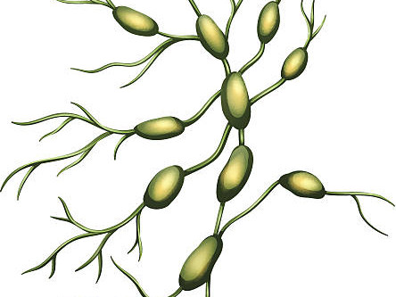 Lymphatic Therapy and Autoimmune Disease