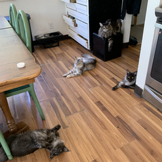 Gus, Noodle, Mochi, and Adelaide