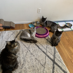 Adelaide, Noodle, Gus, Mochi