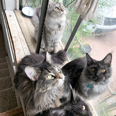 Adelaide, Noodle, Gus, and Mochi