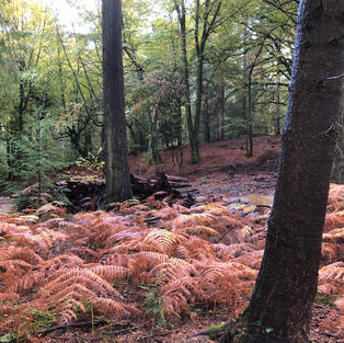 Ferns in autumn colours