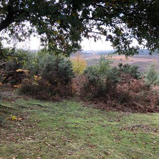 Castle Hill, Burley