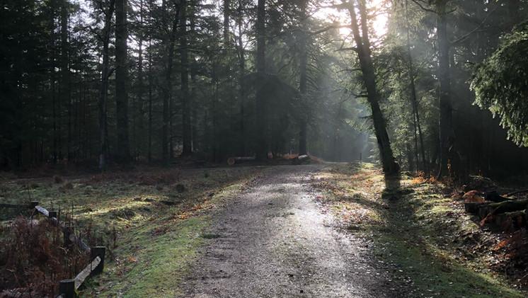 Bolderwood area