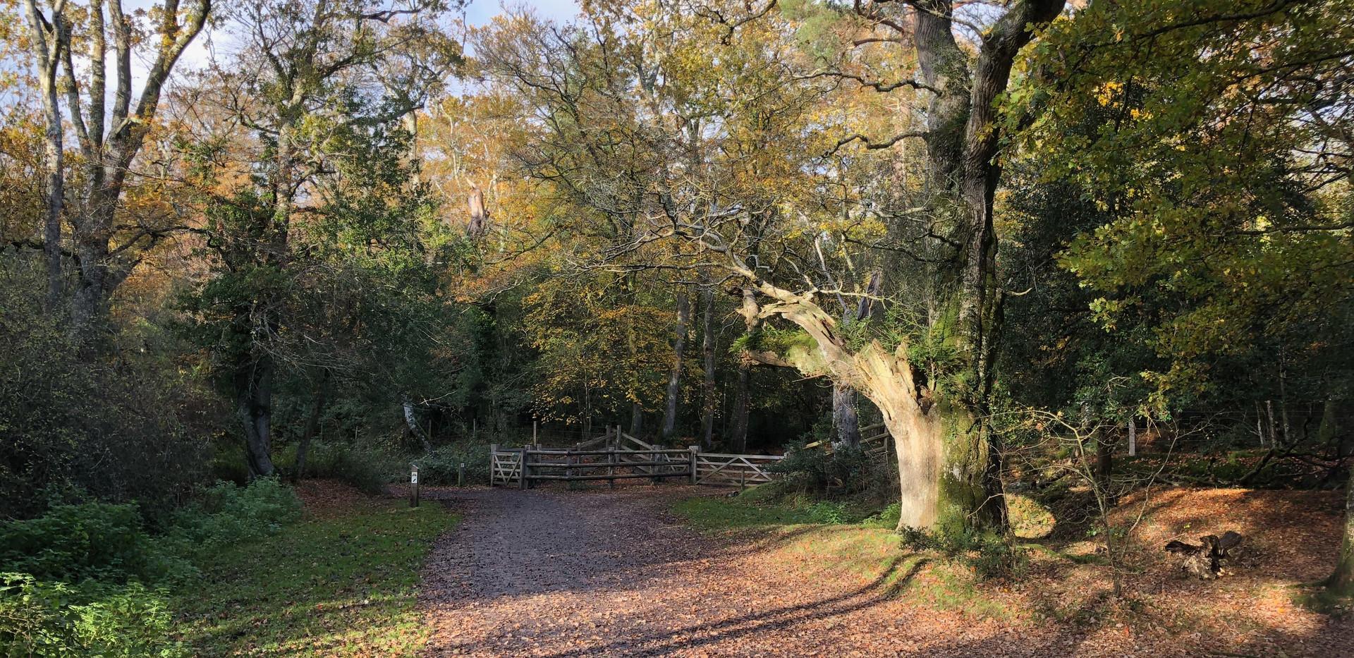 Aldridge woods