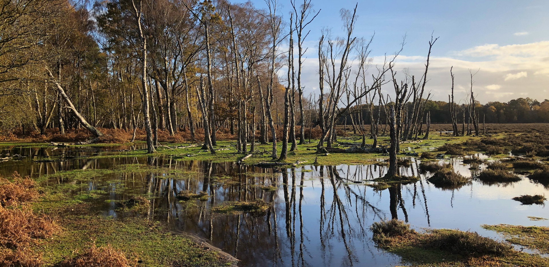 Blackwater Rhinefield