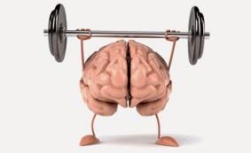 Un cerveau plastiquement sportif
