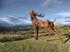 Actaeon-Stag-Shotover-River-lr.jpg