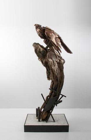Falcon on Driftwood_Left Side_Simon Max