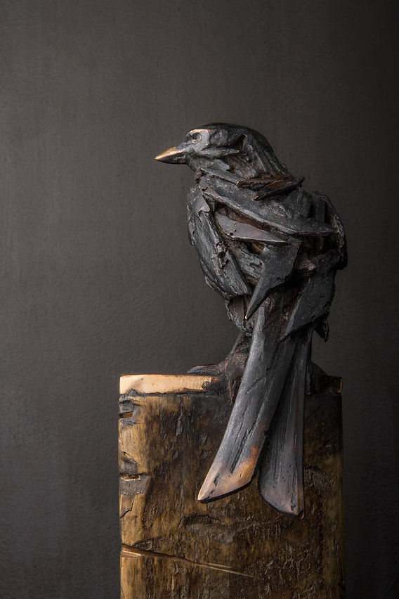 ForkTailed-Drongo-close.jpg