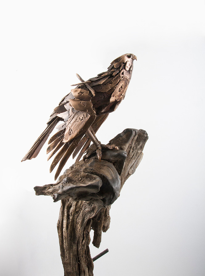 Falcon on Driftwood_Right Side_Simon Max