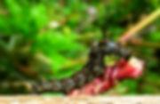Verdecocha%20%20(4)_edited.jpg