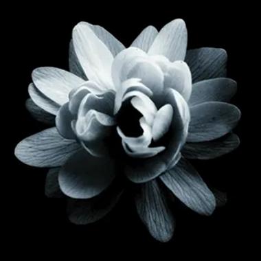 footer-flower.webp