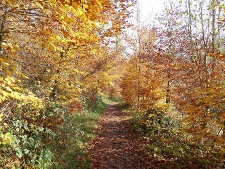 L'automne ou le moment des récoltes et de l'introspection
